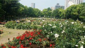 靱公園バラ祭2017年でのバラ園の風景(大阪市西区)